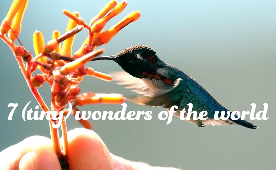7 (tiny) wonders of the world